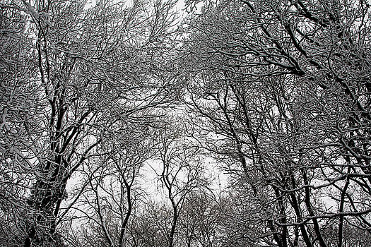 Snow Covered Branches 05 by Jason Moore