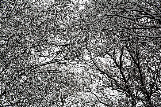 Snow Covered Branches 06 by Jason Moore