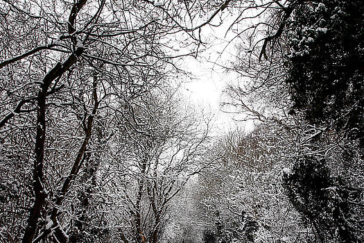 Snow Covered Branches 08 by Jason Moore