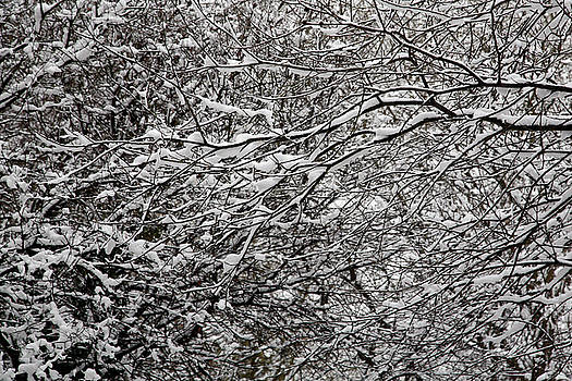 Snow Covered Branches 09 by Jason Moore