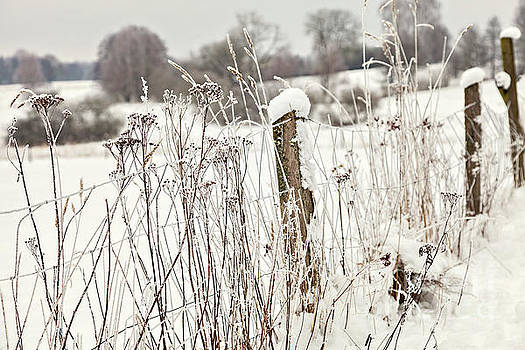 Sophie McAulay - Snow covered fence