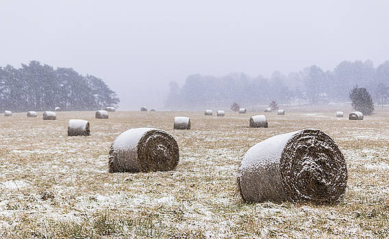 Snow Covered Hay Bales by Devin LaBrie