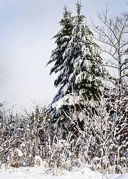 Snow-covered by Nancy Killam