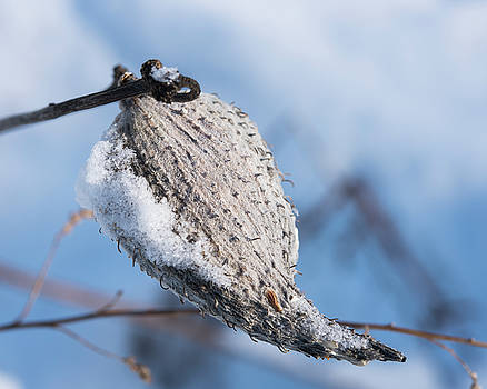 Snow-Covered Pod by Brian Stricker