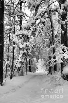 Dan Friend - Snow covered trail