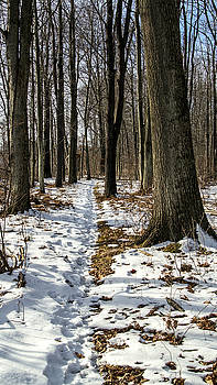 Snow Covered Trail by Frank Morales Jr