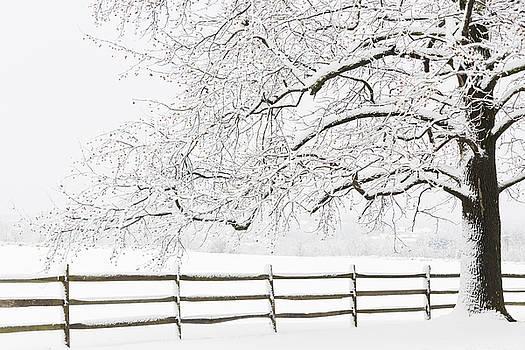 Oscar Gutierrez - Snow Covered Tree