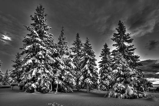 Snow covered trees bw by Ivan Slosar