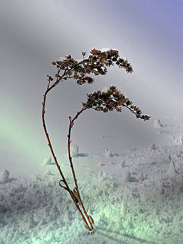 Snow Covered Weeds by Judy Johnson