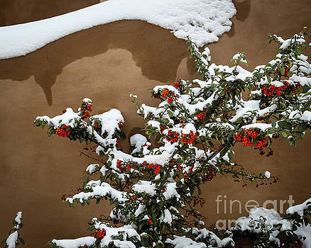 Jon Burch Photography - Snow Designs