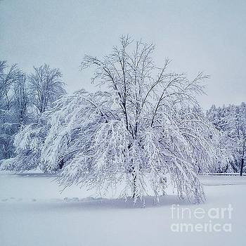 Snow Encrusted Tree by Mary Capriole