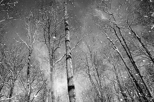 Dawn J Benko - Snow Fall