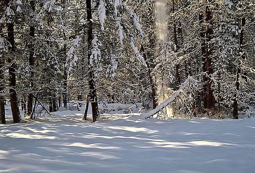 Snow Falling off Cedars by Tom Vaughan
