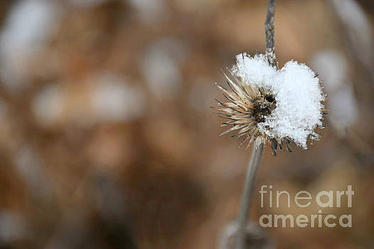 Snow Flower by Kathy M Krause