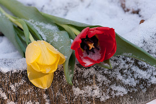 Snow Flowers by George Lovelace