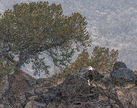 Snow Flurry Bald Eagle by Britt Runyon