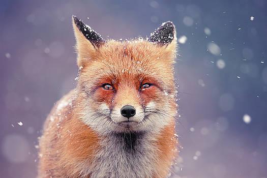 Snow Fox Series - Red Fox in Blue by Roeselien Raimond