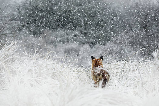 Snow Fox Series - The End....and a New Beginning by Roeselien Raimond