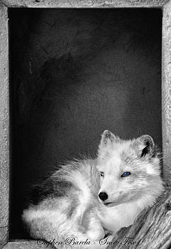 Snow Fox by Stephen Barela