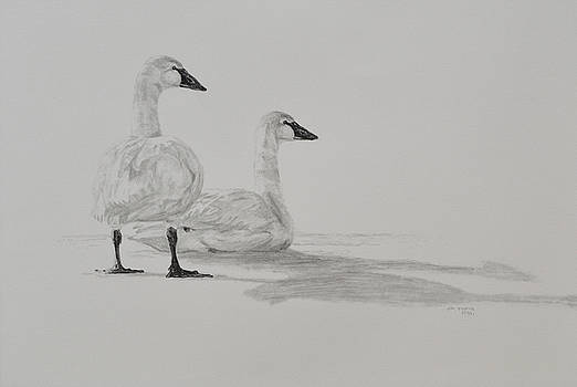 Snow Geese by Jim Young