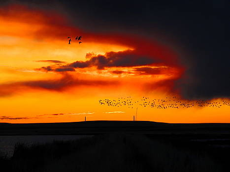 Leah Grunzke - Snow Geese