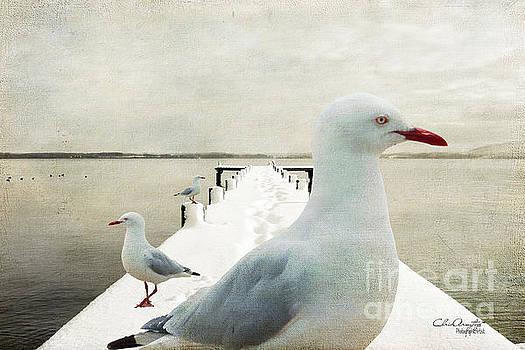 Snow Gulls by Chris Armytage