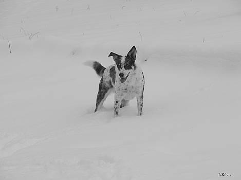 Snow Heeler by Alana  Schmitt