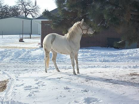 Snow Horse by Deborah Conioloso