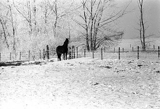 Snow Horse by William Kimble