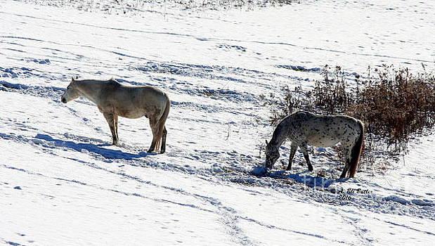 Snow Horses by Ann Butler