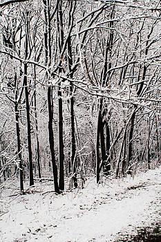 Snow II by Amanda Kiplinger