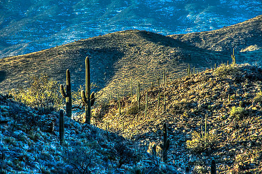 Snow In The Desert by Kimmi Craig