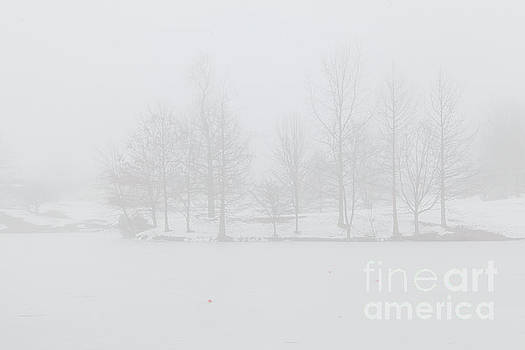 Larry Braun - Snow in the Fog