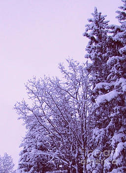 Marianne NANA Betts - snow laden trees