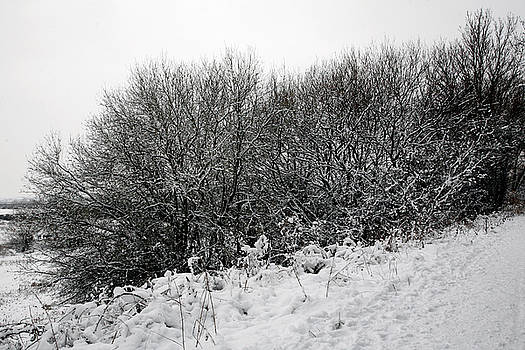 Snow Landscape 14 by Jason Moore