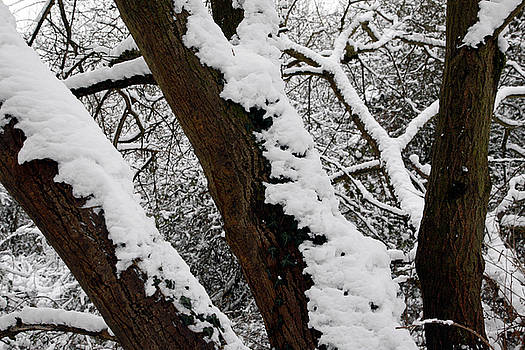 Snow Landscape 15 by Jason Moore