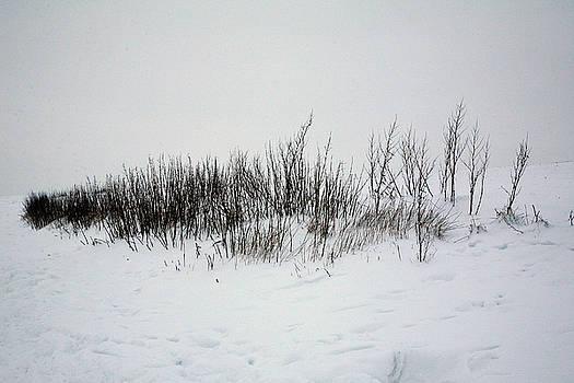 Snow Landscape 17 by Jason Moore