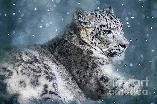 Snow Leopard by Geraldine DeBoer