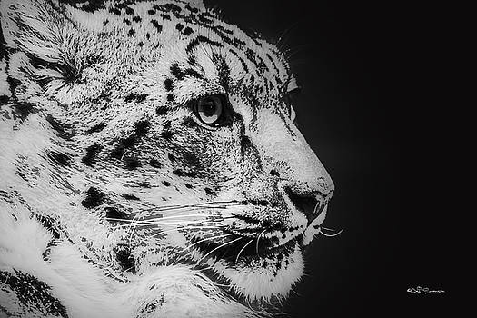 Snow Leopard by Jeff Swanson
