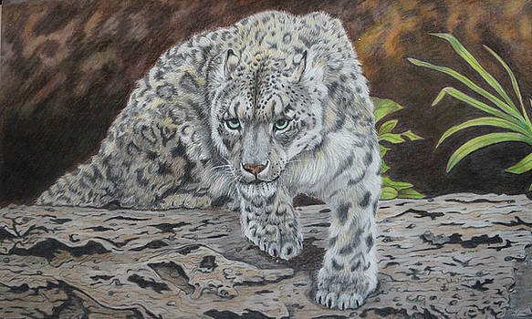 Snow Leopard on Alert by JoAnn Morgan Smith