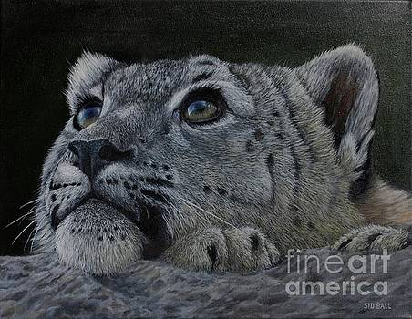 Snow Leopard by Sid Ball
