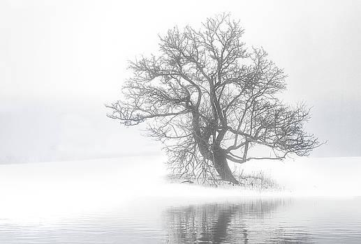 Snow Melt Fog by Gordon Ripley