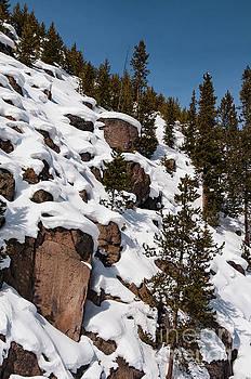 Bob Phillips - Snow Moguls and Pine Trees