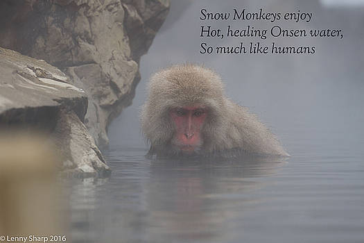 Leonard Sharp - Snow Monkey Onsen - Haiku
