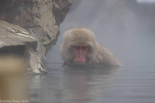 Leonard Sharp - Snow Monkey Onsen