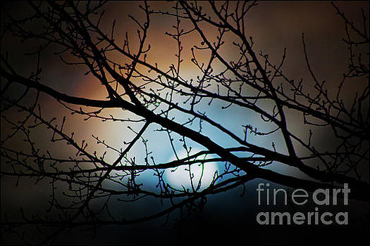 Snow Moon 2 by Janie Johnson