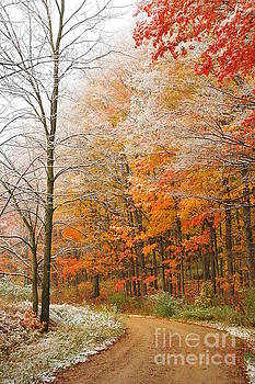 Terri Gostola - Snow on Autumn Trees