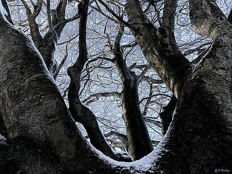 Snow on Branches by Celtic Artist Angela Dawn MacKay