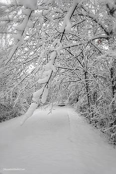 Snow on Macomb Orchard Trail by LeeAnn McLaneGoetz McLaneGoetzStudioLLCcom
