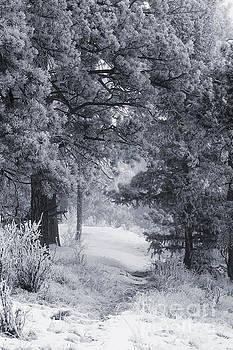 Steve Krull - Snow on the Bald Mountain Trail